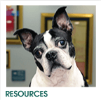 Pet Owner Resources