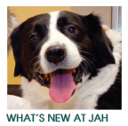 News at Jefferson Park Animal Hospital