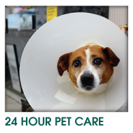24 HOUR PET CARE