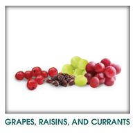 Grapes, Raisin, Currant Toxicity