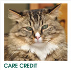 Care Credit Medical Card