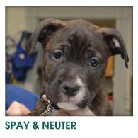 Spay & Neuter