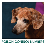 POISON CONTROL NUMBERS