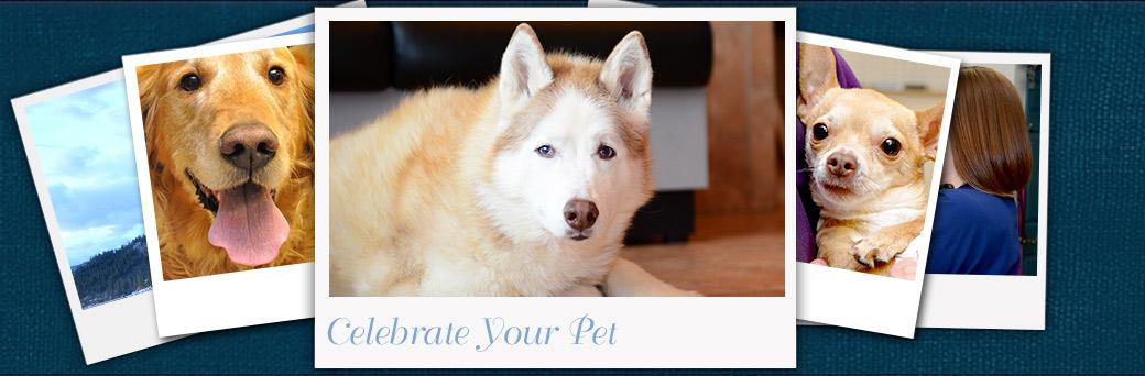 Celebrate your pet