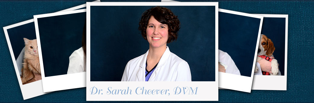 Sarah Cheever, Veterinarian