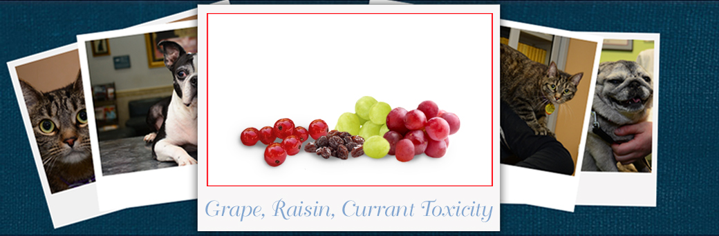 Jefferson Emergency Outer Loop Grapes Raisins and Currants