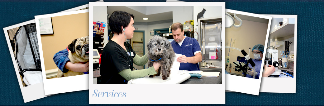 Jefferson Animal Hospital Outer Loop Services