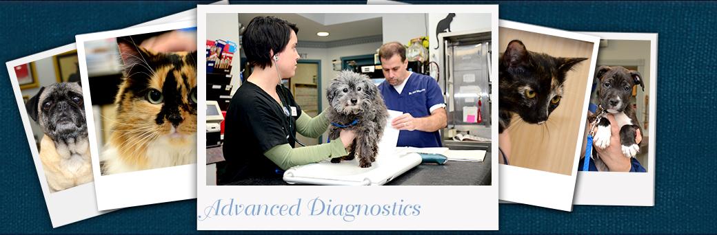 Jefferson Animal Hospital Emergency Diagnostics