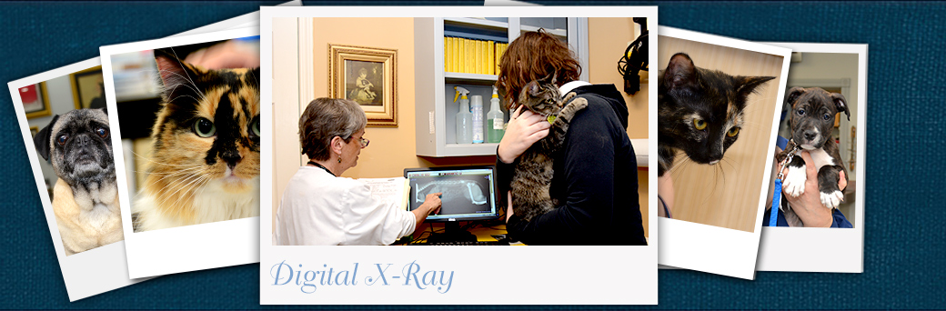 Jefferson Animal Hospital Emergency Digital X-ray