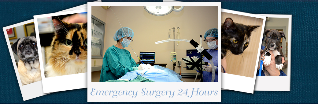 Jefferson Animal Hospital Emergency Surgery