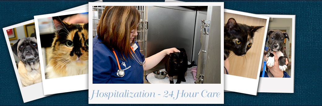 Jefferson Animal Hospital Emergency Services Hospitalization