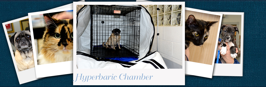 Jefferson Animal Hospital Emergency Hyperbaric Chamber