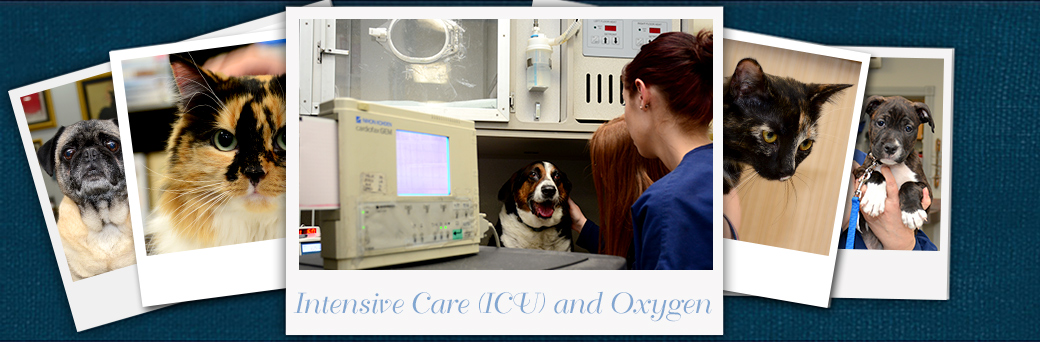Jefferson Animal Hospital Emergency Services ICU and Oxygen