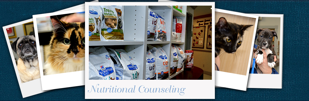 Jefferson Animal Hospital Emergency Nutrition for Pets