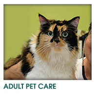 ADULT DOG & CAT CARE