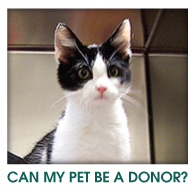 Can My Pet Be A Donor?