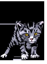 Kitten Check List