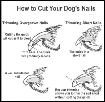 How to Trim Your Dogs Nails
