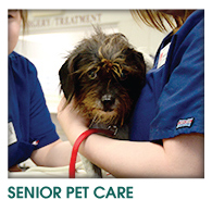 SENIOR DOG & CAT CARE
