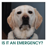 IS IT AN EMERGENCY?