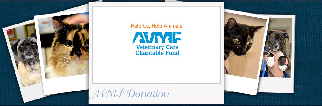 Donate to the AVMF