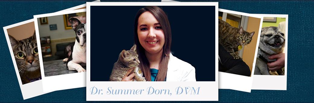 Summer Dorn, Veterinarian
