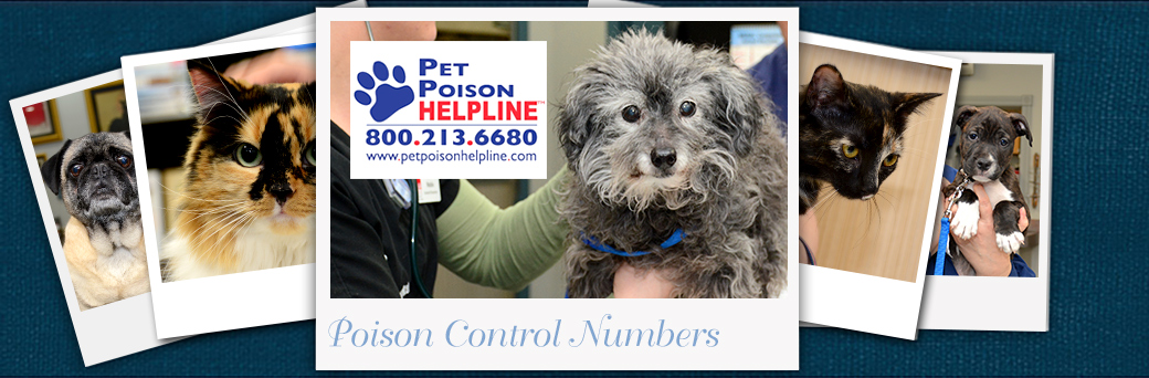 Jefferson Emergency Outer Loop Poison Control Phone Number