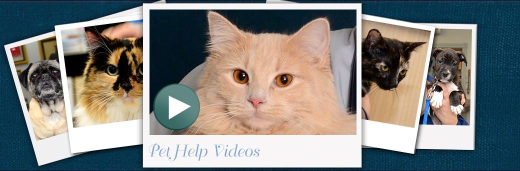 Jefferson Outer Loop Pet Help Videos