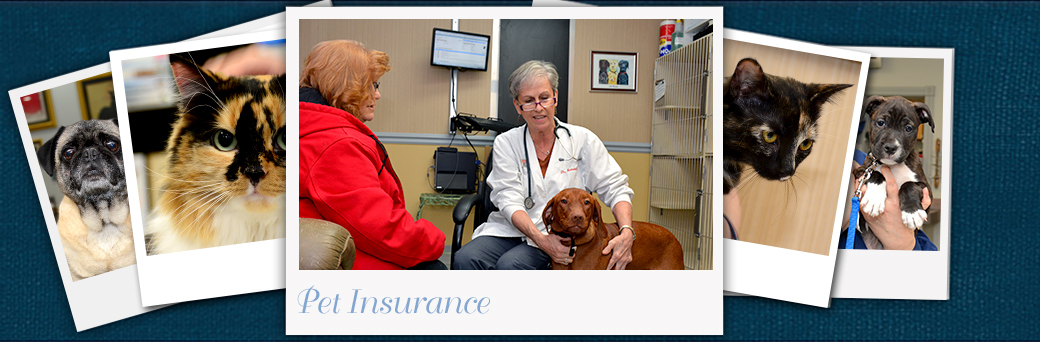 Jefferson Animal Hospital Emergency Outer Loop Pet Insurance