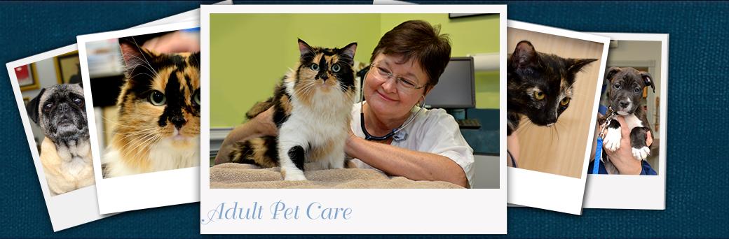 Jefferson Animal Hospital Emergency Adult Pet Care