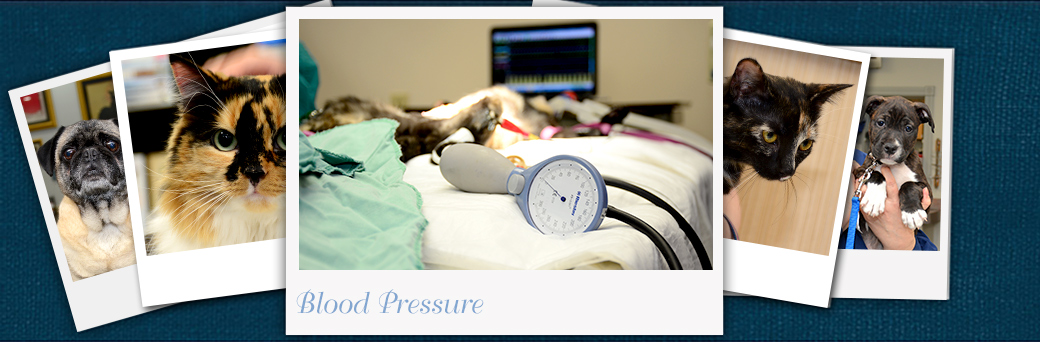 Jefferson Animal Hospital Emergency Blood Pressure