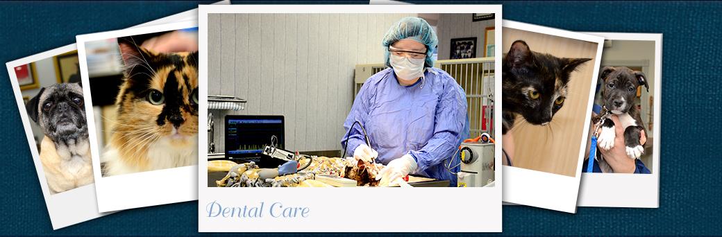 Jefferson Animal Hospital Emergency Dental Care