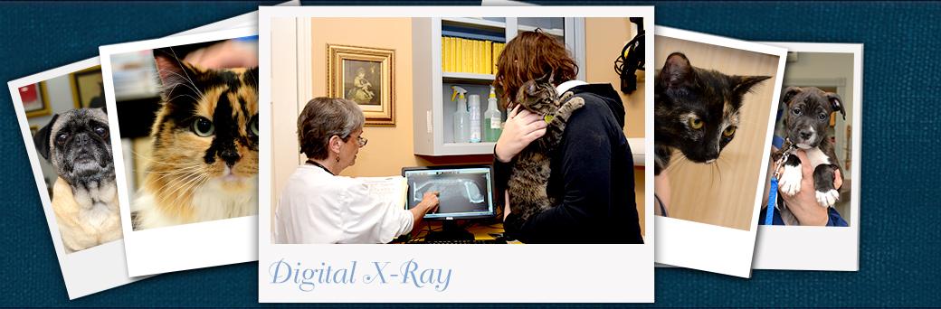 Jefferson Animal Hospital Emergency Digital X-ray