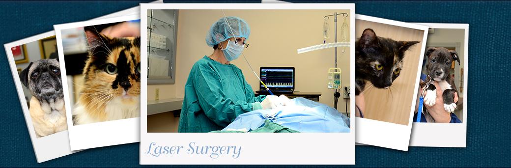 Jefferson Animal Hospital Emergency Laser Surgery