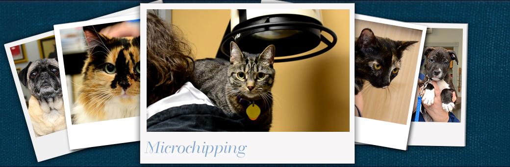 Jefferson Animal Hospital Emergency Microchipping