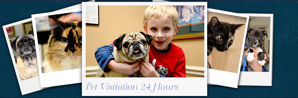 Jefferson Animal Hospital Emergency Services Pet Visitation