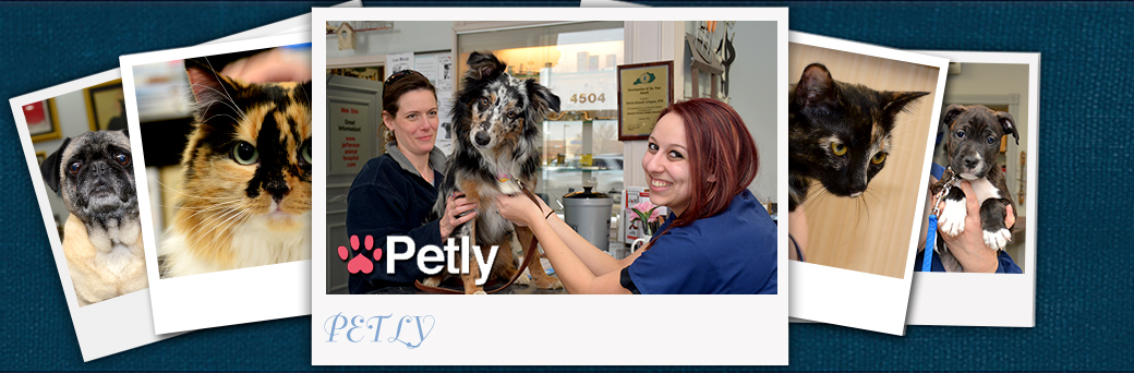 Jefferson Animal Hospital Emergency Petly