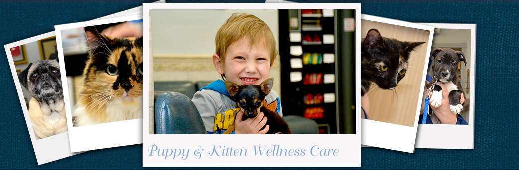 Jefferson Animal Hospital Emergency Puppy Kitten Wellness