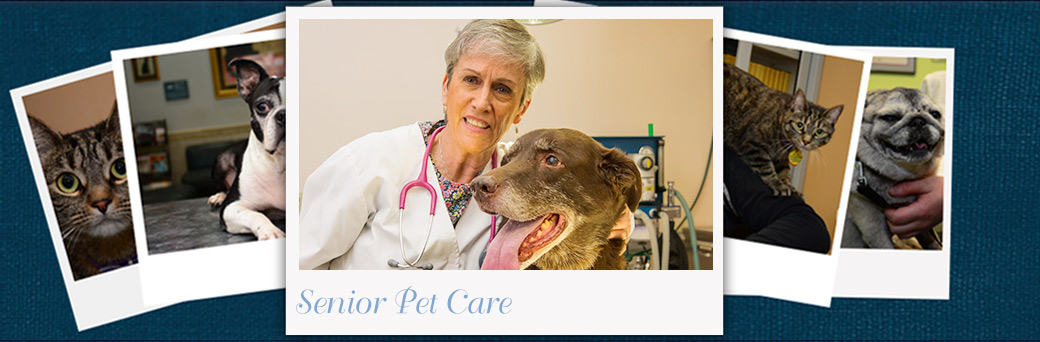 Jefferson Animal Hospital Emergency Senior Pet Care