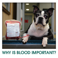 Why Is Blood Important?