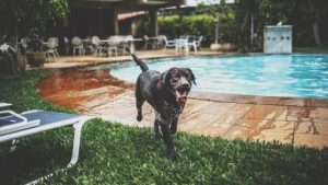 Summer tip for dogs
